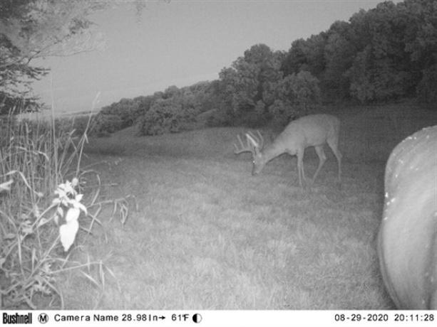 Elizabeth, Illinois, ,Hunting,For Sale,20210164
